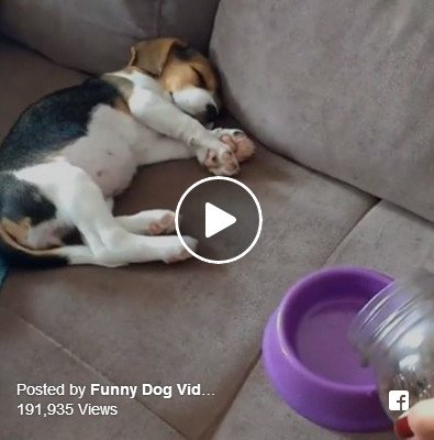 Funny intermission: This dog has the best reaction to food (video)